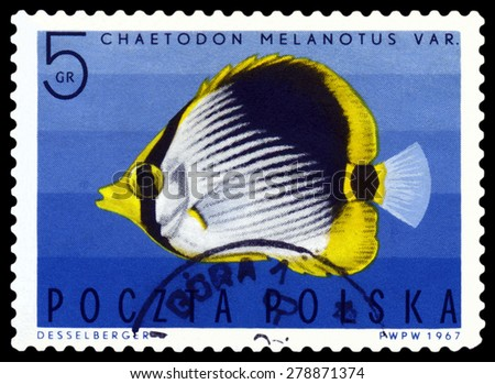 POLAND - CIRCA 1967: A stamp printed in Poland, shows  fish  Striped Butterflyfish, from the series Tropical fish, circa 1967  - stock photo