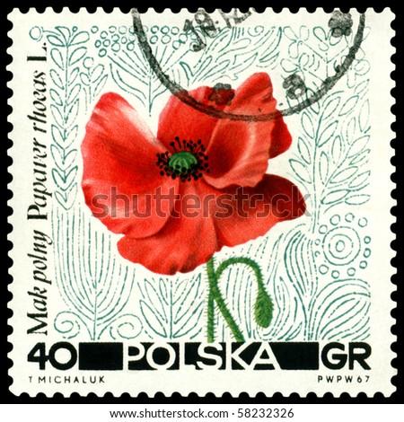 POLAND - CIRCA 1967: a stamp printed in Poland shows flower  Papaver rhoeas, circa 1967 - stock photo