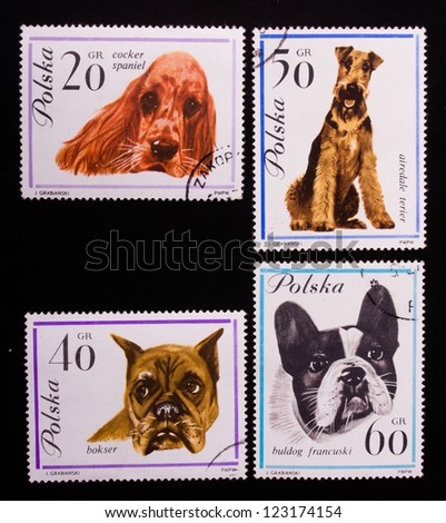 POLAND - CIRCA 1970: A stamp printed in Poland shows four kinds of dogs,circa 1970 - stock photo