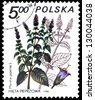 "POLAND - CIRCA 1980: A stamp printed in Poland shows Mentha piperita, with the same inscription, from the series ""Medical Plant"", circa 1980 - stock photo"