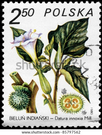 """POLAND - CIRCA 1980: A stamp printed in POLAND shows the Datura inoxia, from the series """"Medicinal Plants"""", circa 1980 - stock photo"""