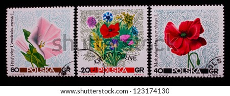 POLAND - CIRCA 1967: A stamp printed in Poland shows three different kinds of rose and red flowers,circa 1967 - stock photo