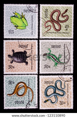 POLAND - CIRCA 1963: A stamp printed in Poland shows three kinds of snakes,a turtle and a frog,circa 1963 - stock photo