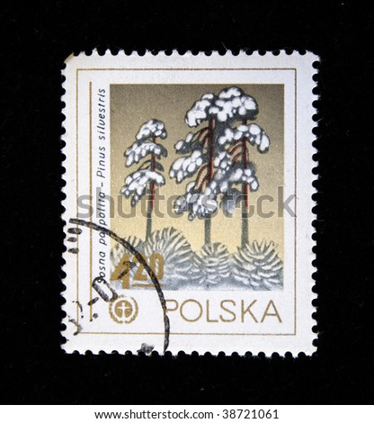 POLAND- CIRCA 1982: A stamp printed in Poland shows tree Scots Pine - Pinus sylvestris, one stamp from series, circa 1982.