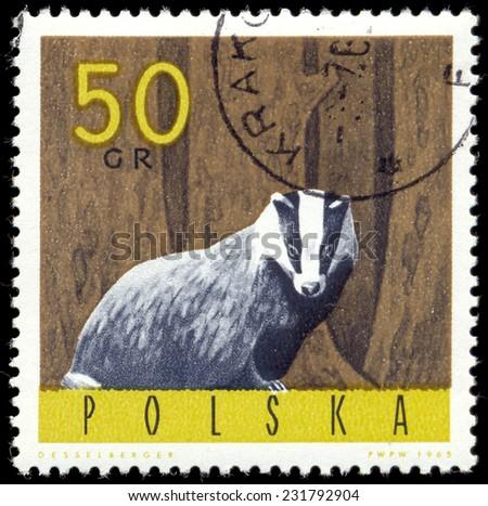 POLAND - CIRCA 1965: a stamp printed in the Poland shows European Badger, Meles Meles, circa 1965 - stock photo