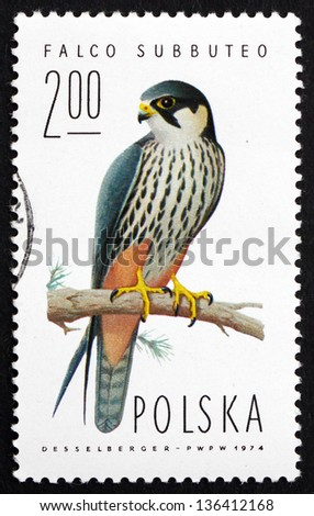 POLAND - CIRCA 1975: a stamp printed in the Poland shows Hobby Falcon, Falco Subbuteo, Bird of Prey, circa 1975 - stock photo