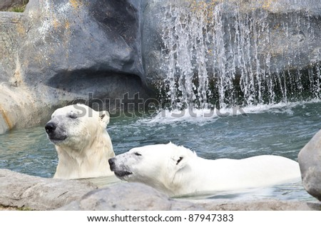 polar bear - stock photo