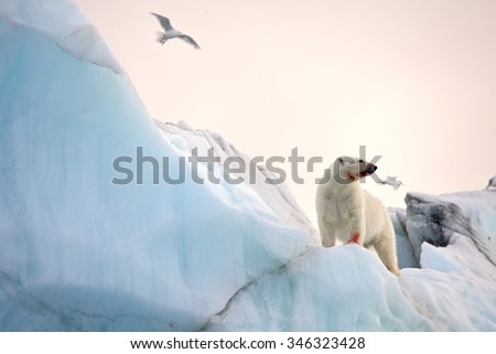 Polar bear and ivory gull in natural environment - stock photo