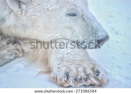 Polar bear head close up,digital oil painting - stock photo