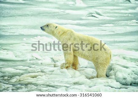 Polar bear in Canadian Arctic,digital oil painting - stock photo