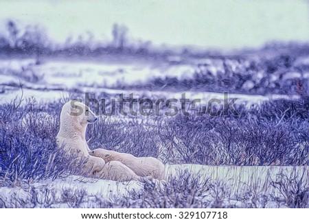 Polar bear nursing her cub in Canadian Arctic,digital oil painting - stock photo