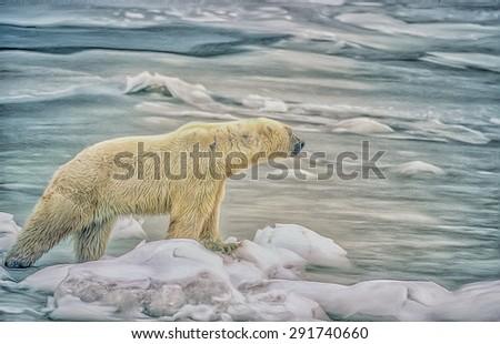 Polar bear on Hudson Bay shoreline in Canadian Arctic,digital oil painting - stock photo