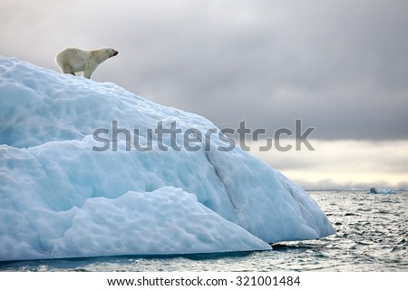 Polar bear on iceberg - stock photo