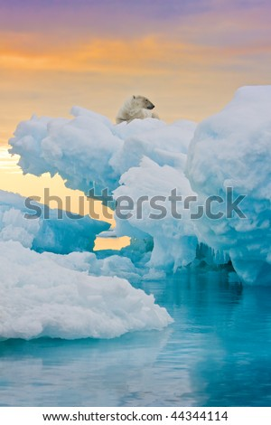 Polar bear sitting on frozen ice outcrop.  Vertically framed shot. - stock photo