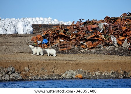Polar bear survival in Arctic - pollution problems