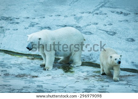 Polar bear with cub. - stock photo