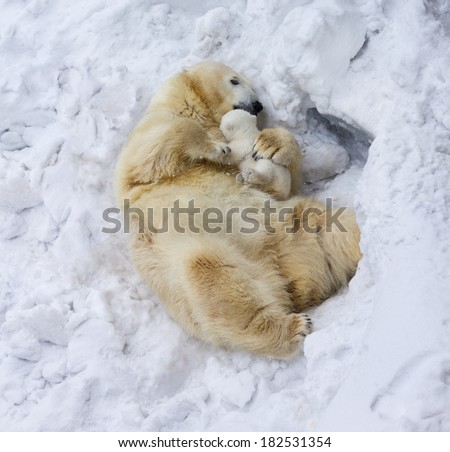 Polar bear with cub. Mother love - stock photo