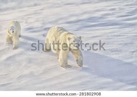 Polar bear with her cub on Arctic tundra,digital oil painting - stock photo
