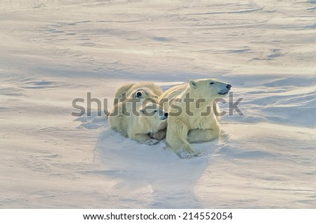 Polar bear with her cubs on Arctic tundra - stock photo