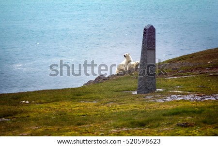 Polar bears on Franz-Josef Land, Northbrook. Female with cub watching photographer from behind monument to expedition of duca degli Abruzzi to North pole (1900). Conquest of North pole, Farthest North