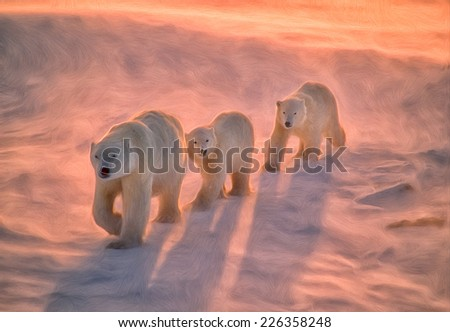 Polar bears on tundra in Arctic sunset - stock photo