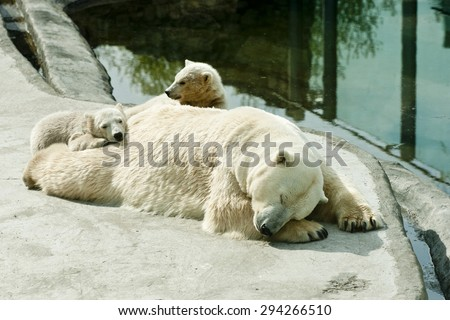 Polar she-bear with cubs sleeps - stock photo