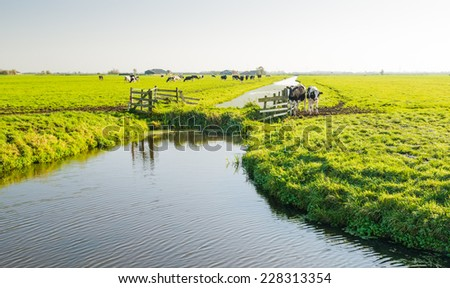 Polder landscape in the Netherlands early in the morning on a sunny day in the fall season. - stock photo