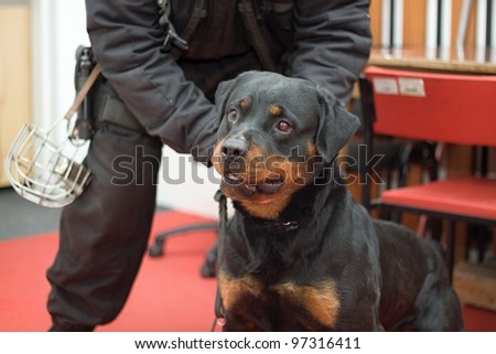police dog in action - stock photo