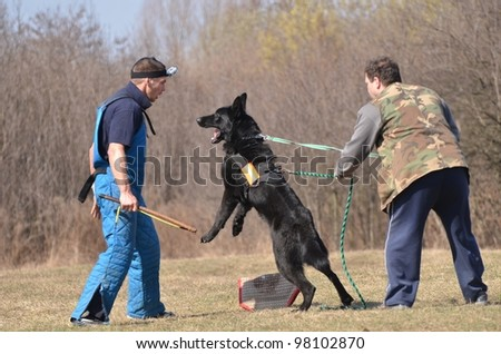 police dog training - stock photo