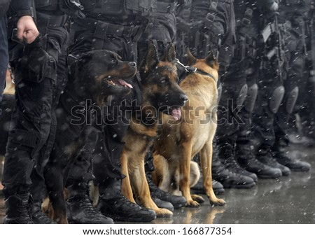 Police dogs - stock photo