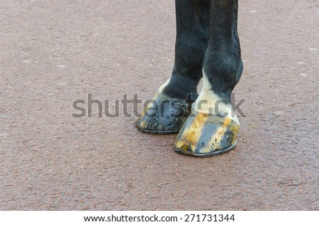 Police horse legs on paved road in front of Buckingham palace at London, United Kingdom. Closeup background - stock photo