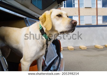 Police sniffer dog during a training exercise with sample packages - stock photo