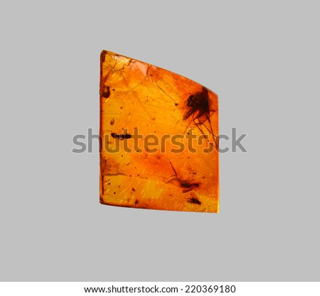 polished amber with ant and mosquito   - stock photo
