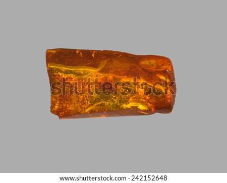 polished amber with insect - stock photo