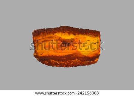 polished amber with spider - stock photo