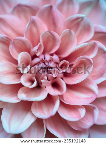 Pollen and petal of pink flower in texture