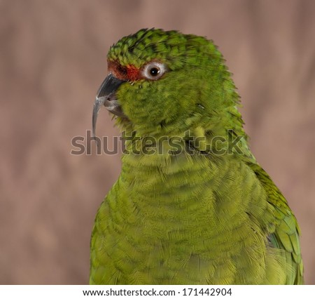 Polly - stock photo