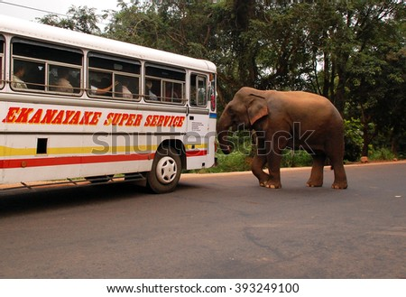 POLONNARUWA, SRI LANKA - DECEMBER 6, 2008: Wild elephant attacks a bus with passengers. No one was injured. - stock photo