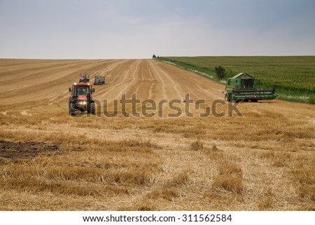 Polski Trambesh - July 2: Agricultural harvested wheat. In the next block - corn on July 2, 2015 Polski Trambesh, Bulgaria