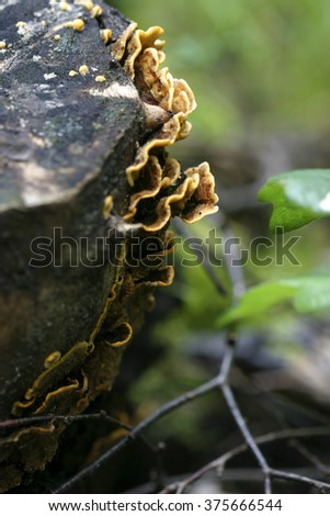 polypore mushroom in a forest - stock photo