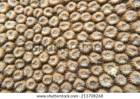 Polyps of coral - stock photo
