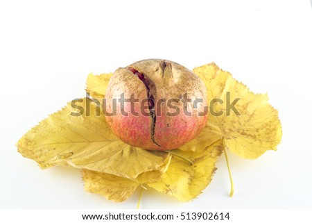 Pomegranate (Punica granatum) and autumn leaves on white background