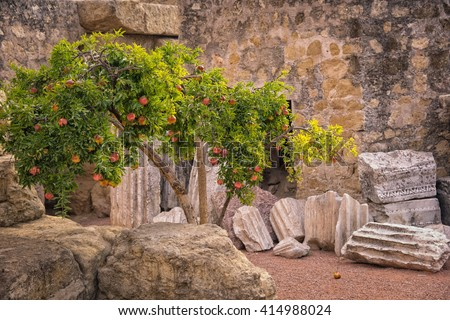 Pomegranate tree growing on the ruins of roman wall in Cordoba, Spain