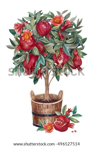 Pomegranate tree with flowers and fruits in a tub. Isolated hand drawn illustration on white background.