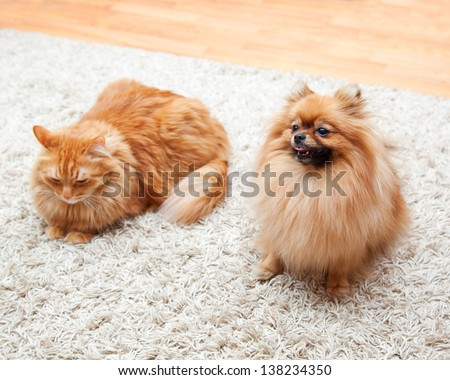 Pomeranian dog and red cat sitting on the carpet - stock photo