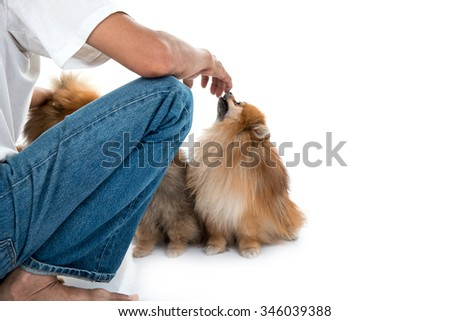 pomeranian dog cute pets happy with owner - stock photo