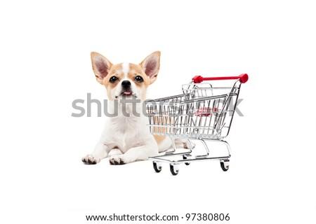 Pomeranian dog next to an empty shopping cart, over white - stock photo