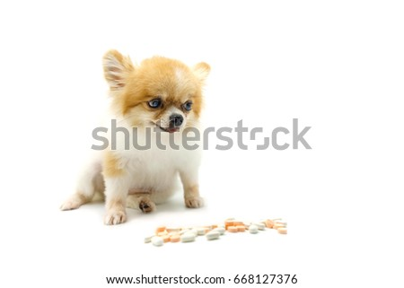 Pomeranian dog sitting on white background stock photo safe to use pomeranian dog sitting on white background with blur tablet drugs isolate veterinary medicine voltagebd Choice Image