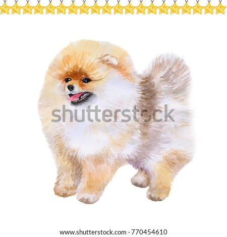 Pomeranian puppy symbol of New Year and Christmas greeting card design topped by stars. Cute small dog watercolor illustration isolated on white, funny postcard. Pom Pom breed of dog of the Spitz type