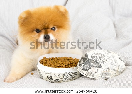 Pomeranian Show-Time getting treats in an easter egg - stock photo